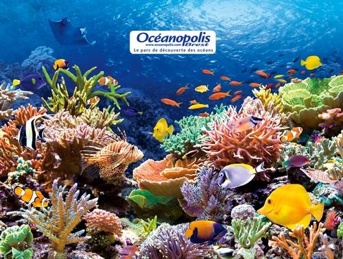 OCEANOPOLIS ENFANT